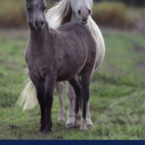 Hevostaito-opas kansi